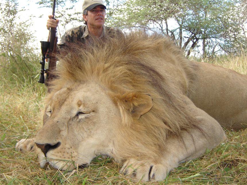 africa_lion_04 Lion killed in trophy hunt big man!! my you