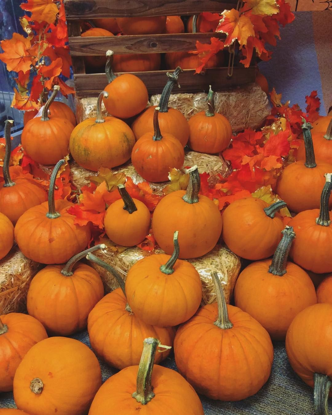 It S National Pumpkin Day What Is Your Favorite Pumpkin Recipe Nationalpumpkinday Weidemandental Favorite Pumpkin Recipes Pumpkin Pumpkin Recipes