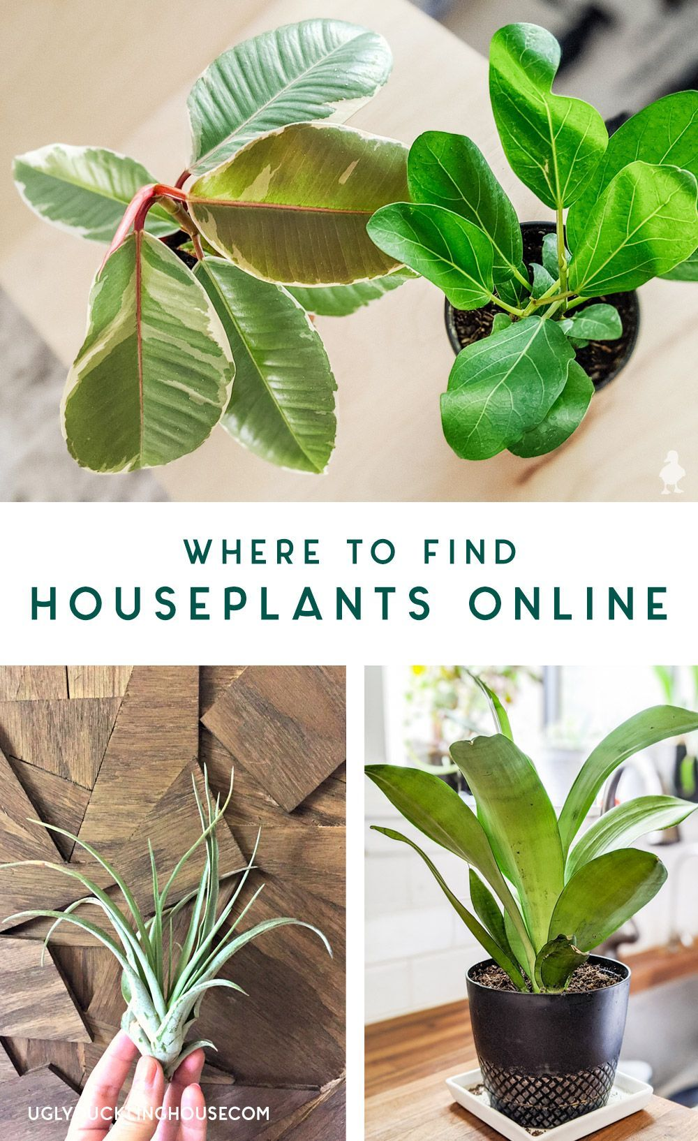 Buying Houseplants Online What To Look For My Fave Shops In 2020 Houseplants Hanging Plants Diy Hanging Plants Outdoor