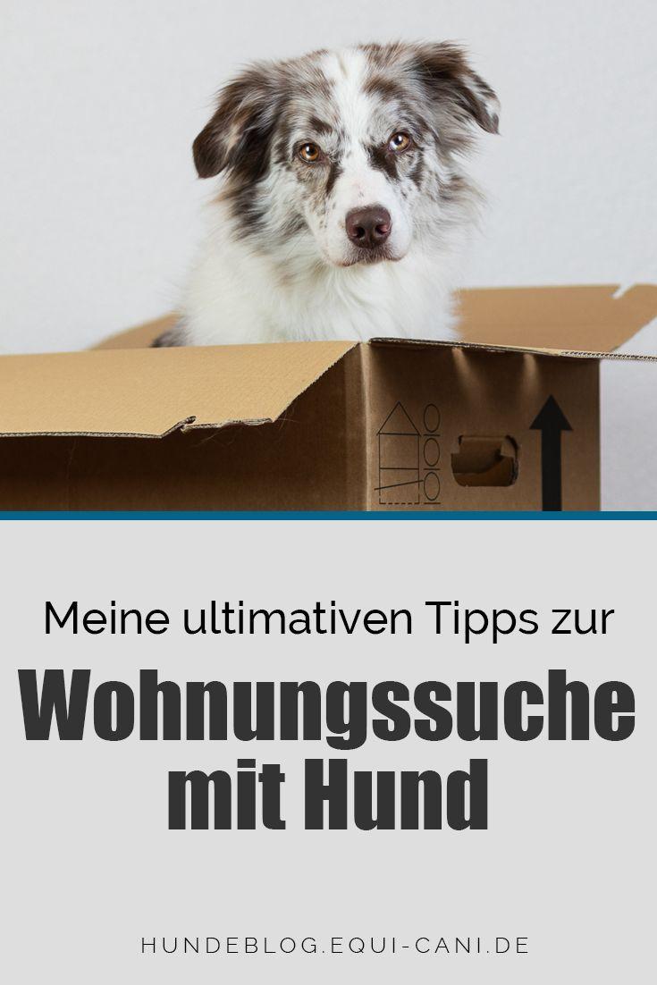 Wohnungssuche mit Hund ein unmögliches Ding Hunde