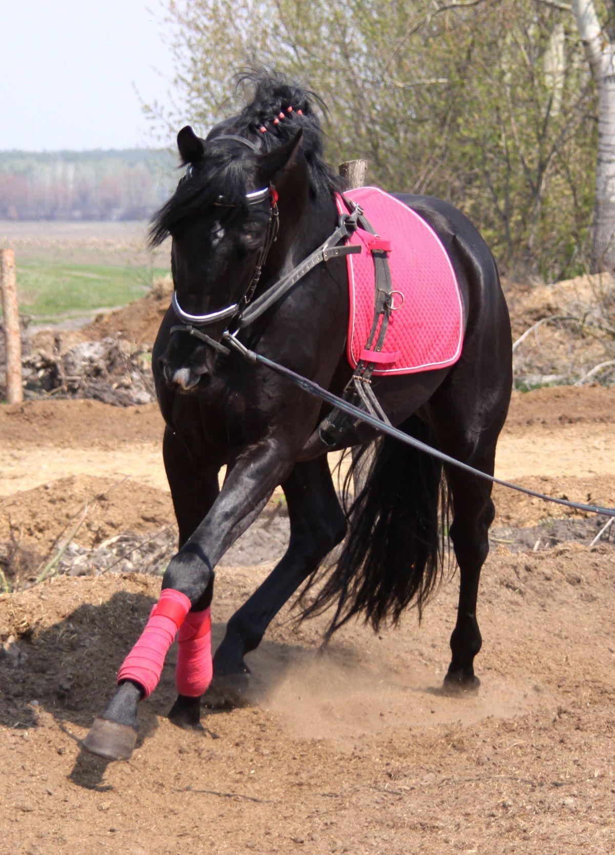 Workout Www Thewarmbloodhorse Com Horses Show Horses Horse Life