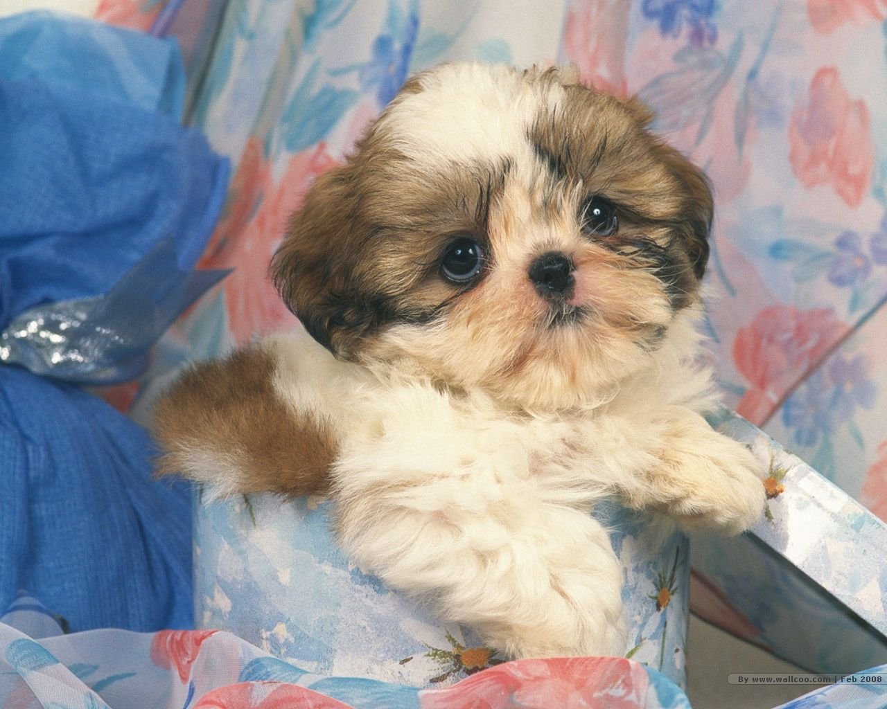 G dogs and puppy pinterest dog