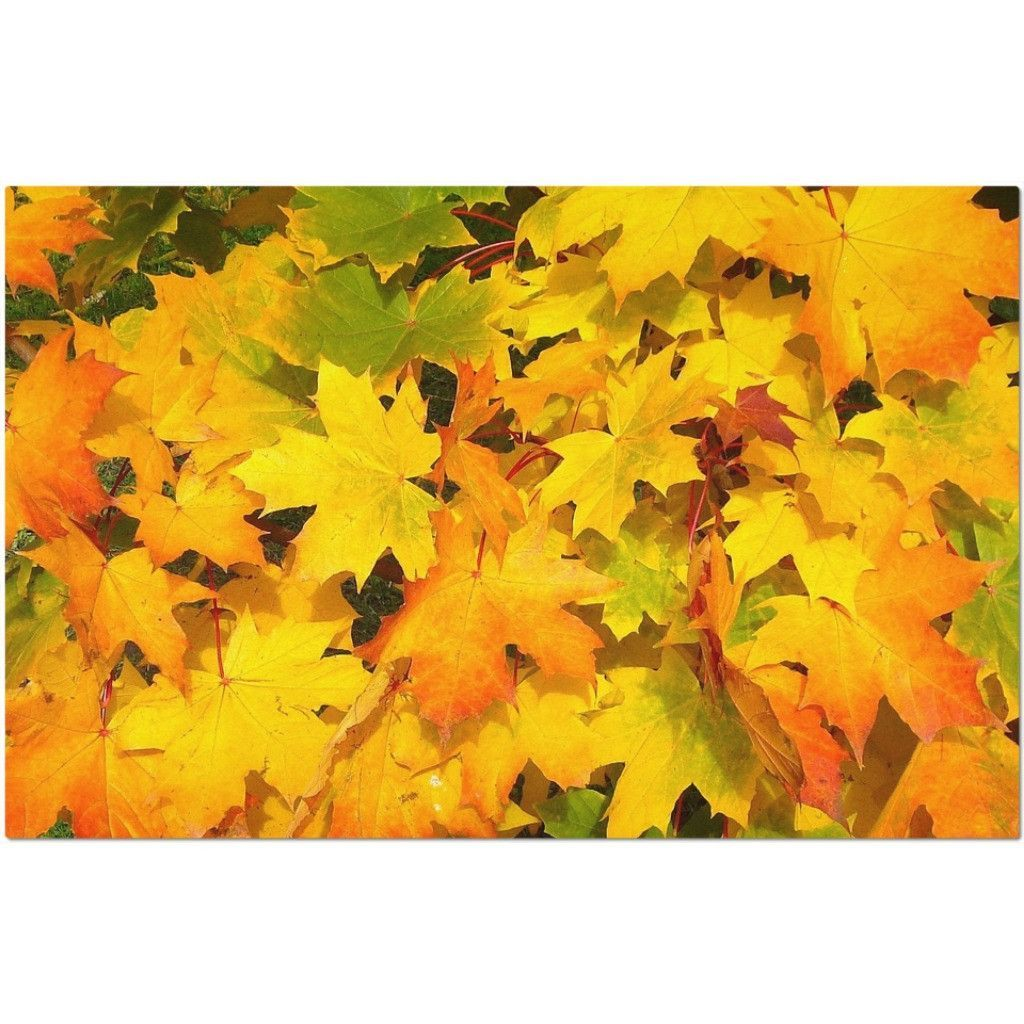 Laminated Autumn Leaves Placemat 11 X 17 Wedding Table Numbers Wedding Table Autumn Leaves