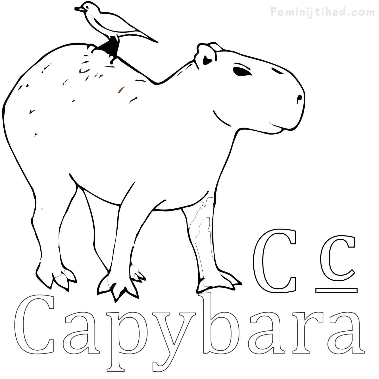Easy Capybara Coloring Pages Free Coloring Sheets Animal Coloring Pages Coloring Pages Capybara