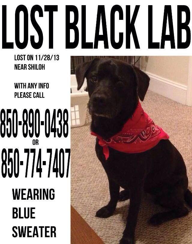 Lostdog 11 28 13 Asheville Nc Biltmore Forest Black Lab Labradorretriever Wearing Blue Sweater 850 890 0438 Https Www F Losing A Dog Find Pets Black Lab