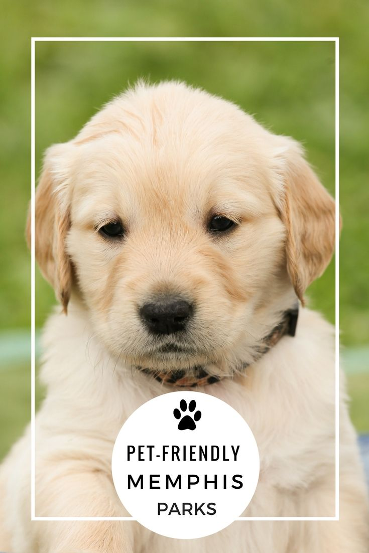 Pet Friendly Dog Parks In Memphis Tn Golden Retriever Dogs