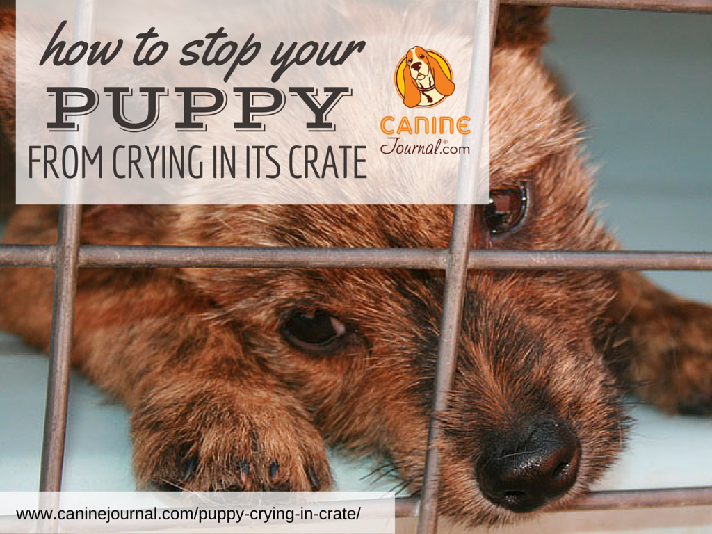 How To Stop Your Puppy From Crying In Its Crate Dog Training Tips