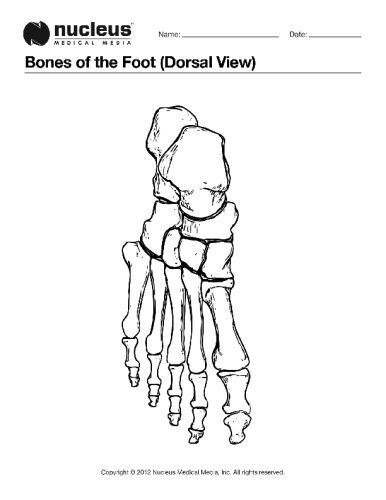 This Anatomy Coloring Book Page Depicts The Bones Of The Foot From
