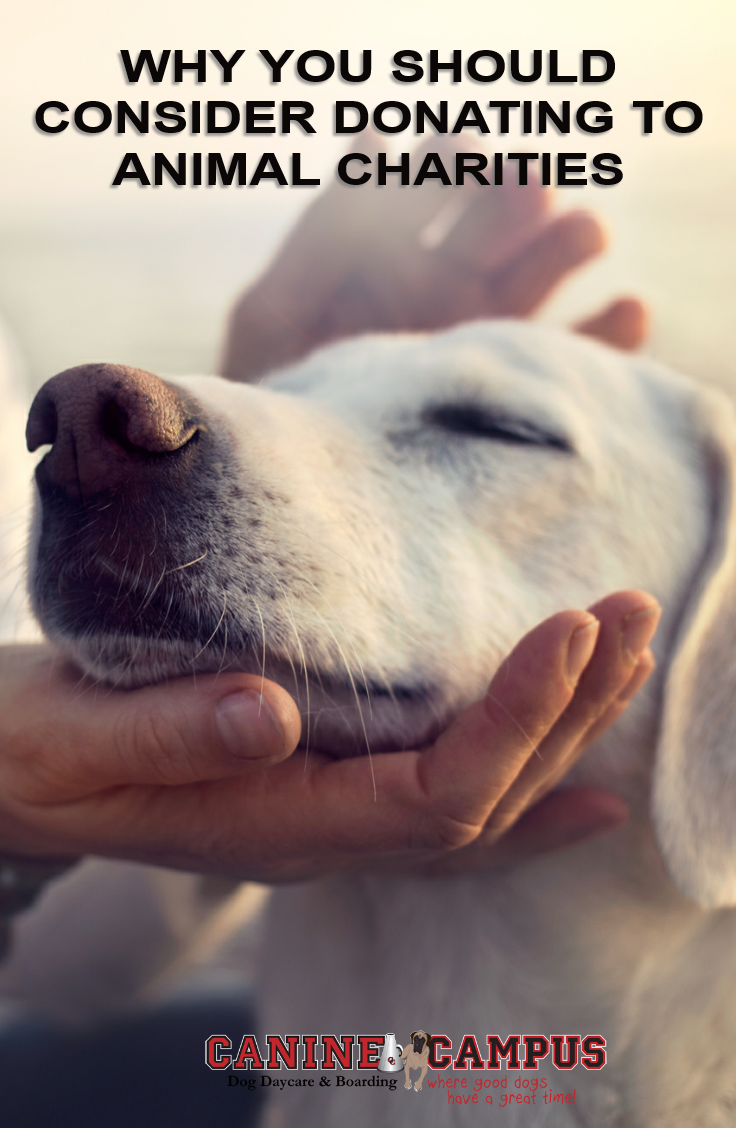 Why You Should Consider Donating To Animal Charities Canine