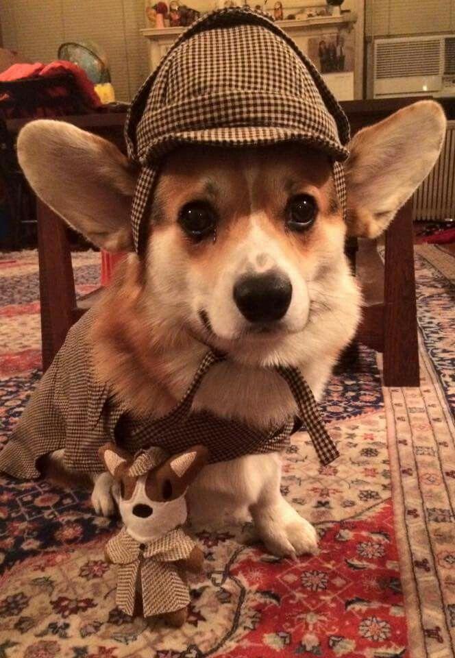 Dr Watson I presume A כלבים 2 Pinterest Draco, Harry