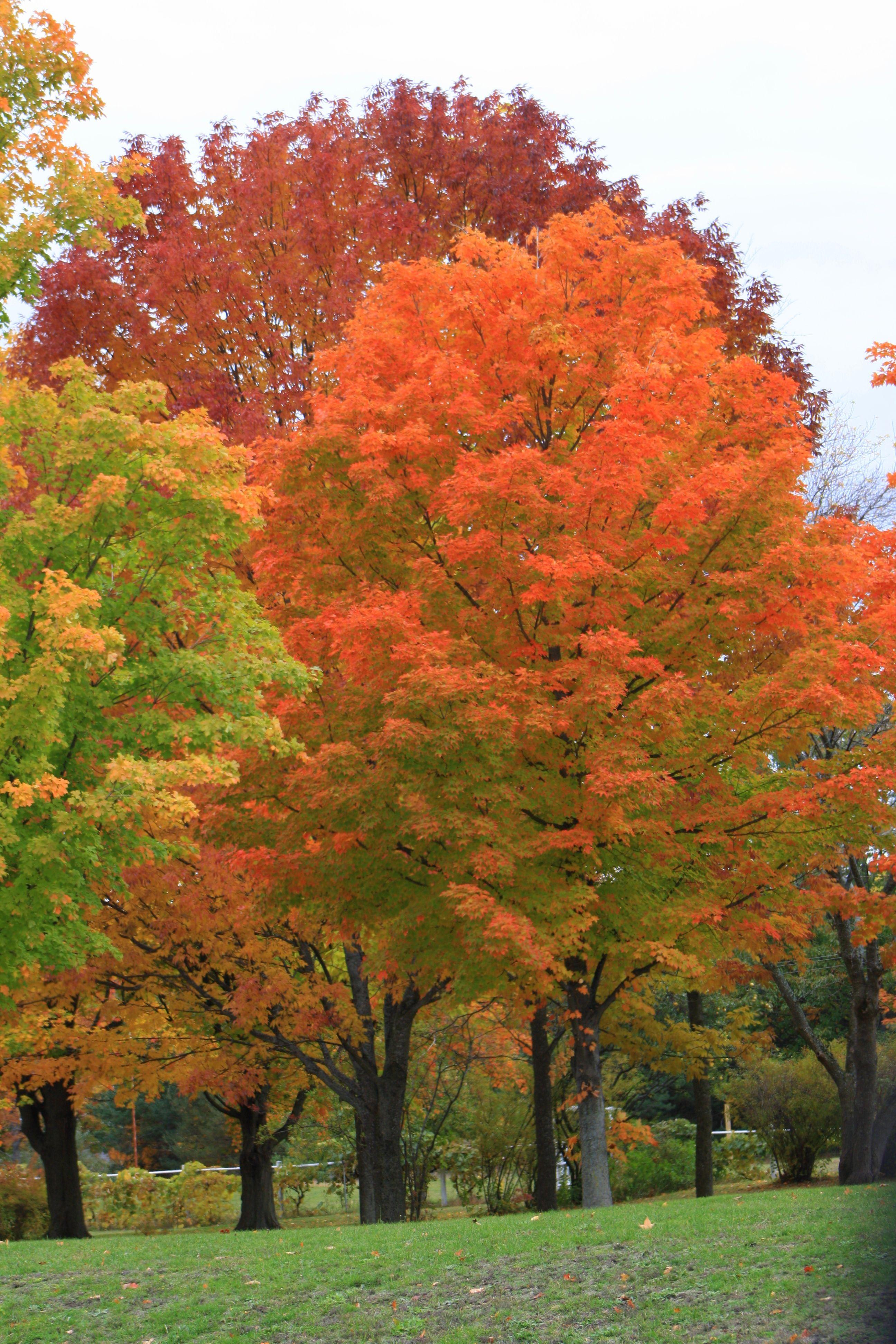 Autumn In Traverse City Mi Traverse City Mi Michigan Travel Traverse City