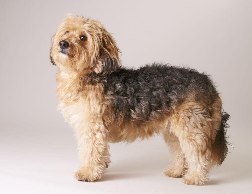 Tiermodellagentur Ute Woelki Modellagentur Fur Tierische Hundewellness Salon Sunrico Bildergalerie Kundenhunde Die 15 Beste In 2020 Yorkshire Terrier Terrier Animals