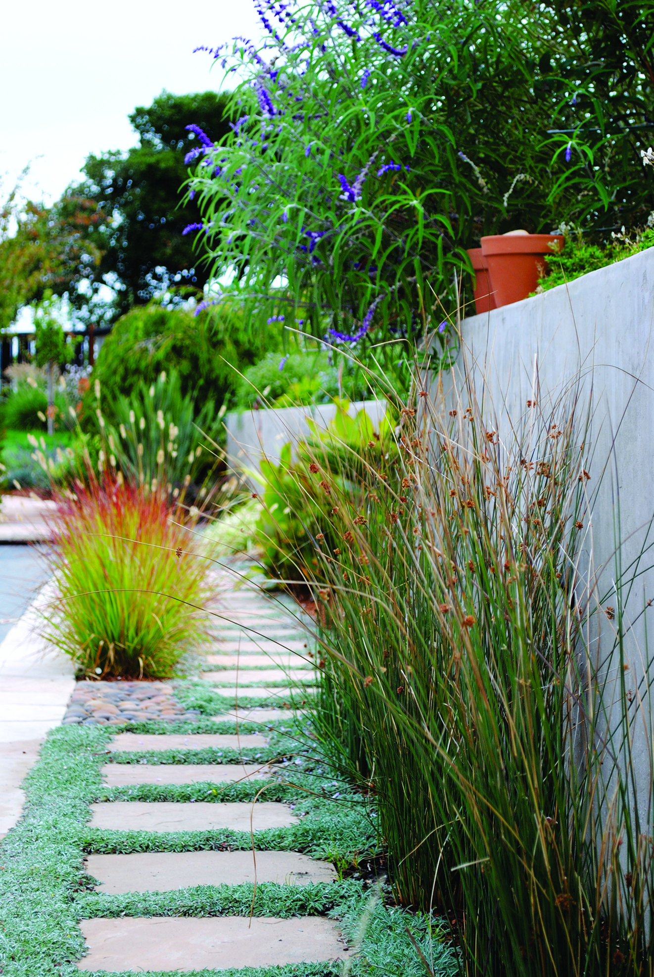 Side yard garden and walkway design Side