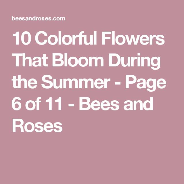 5 Vertical Vegetable Garden Ideas For Beginners: 10 Colorful Summer Blooming Flowers