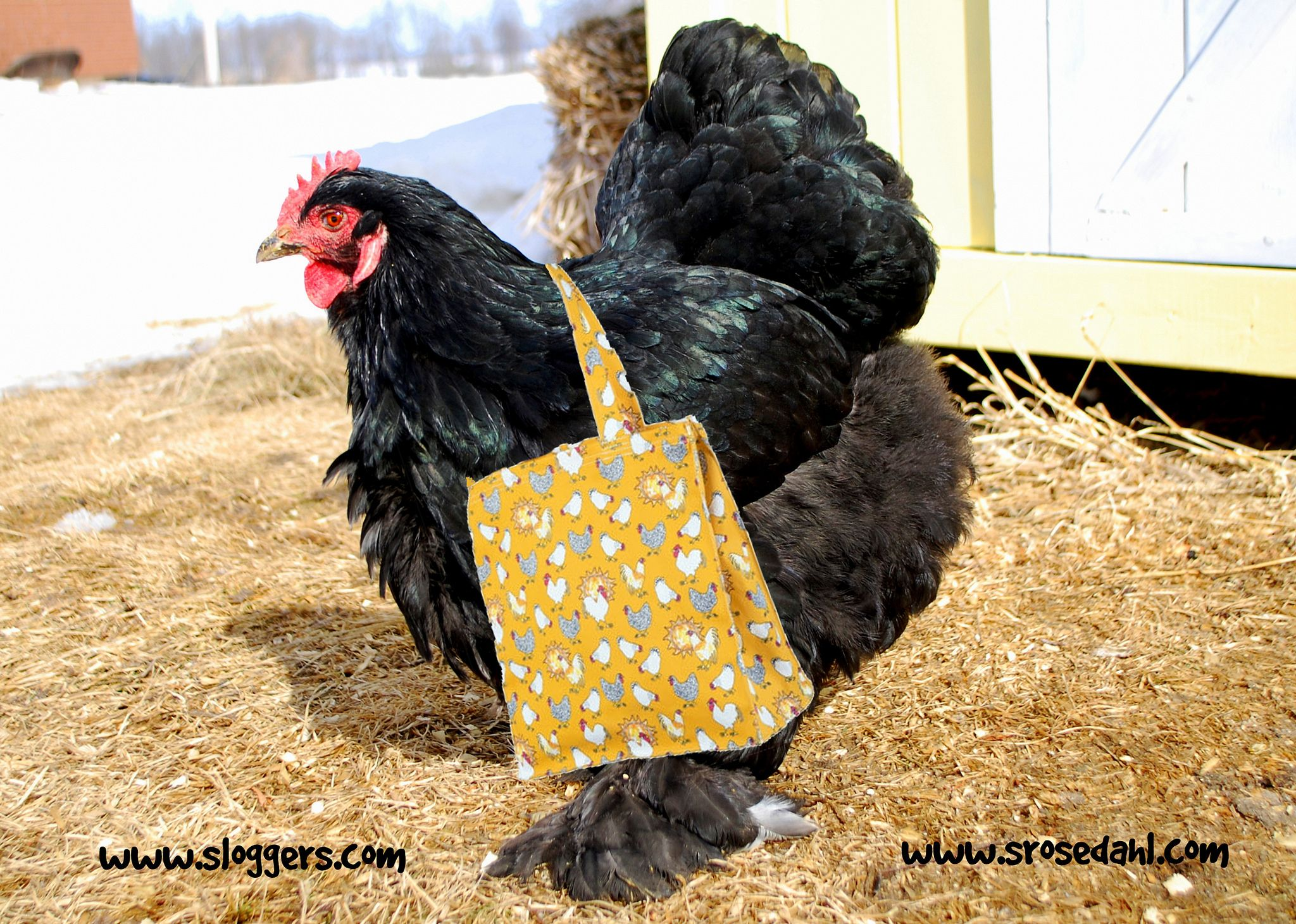 An with Sloggers Tote featuring my chicken art. Ready for spring!  www.sloggers.com  www.srosedahl.com