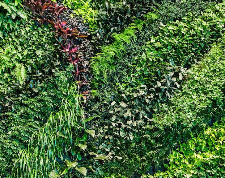 Living Wall Texture Google Search Vertical Garden Design