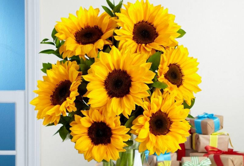My daughter, Niamey Thomas is a radiant, happy young lady.  She is warm and kind.  She is loyal just like a SUN FLOWER History and Meaning of Sunflowers | ProFlowers Blog