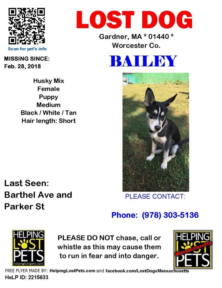 Pin By Found Lost Dogs On Lost Dog Losing A Dog Husky Mix Dogs