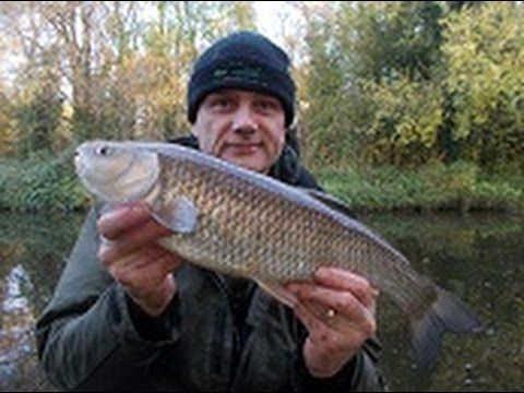 Black Country canal chub. Read the blog here: http://stewartbloorangling.blogspot.co.uk/2013/12/in-it-to-win-it-black-country-canal.html