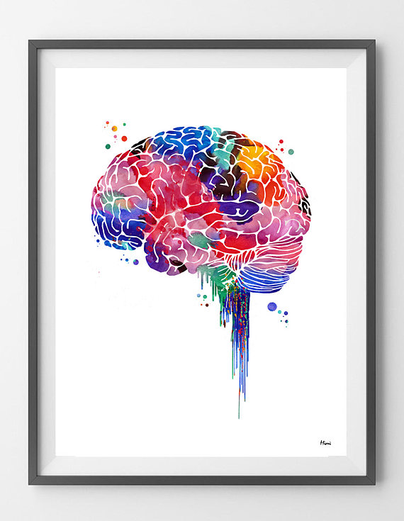 Brain watercolor print anatomy art brain lateral view poster lobes ...