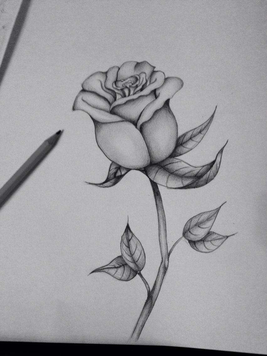 First Attempt At A Black And Grey Rose Pencil Drawings Of Flowers Roses Drawing Art Sketches