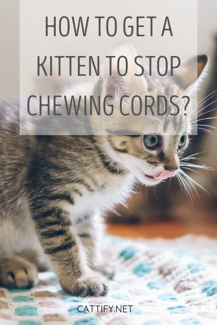 How To Get A Kitten To Stop Chewing Cords Kitten Proofing Getting A Kitten Training A Kitten