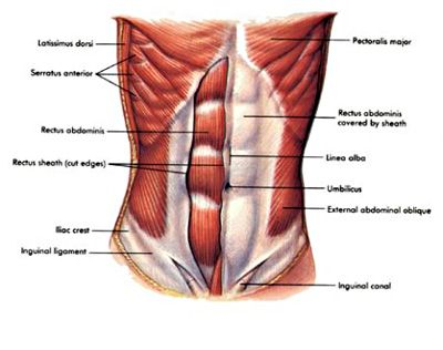 An Abdominal Strain Is A Tear Or Rupture Of Part Of The Stomach