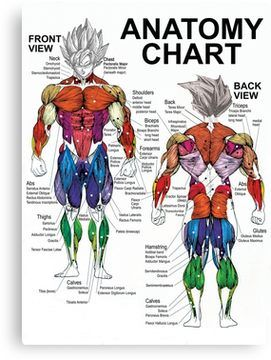 Anatomy chart muscle diagram canvas print pinterest diagram anatomy chart muscle diagram canvas print ccuart Gallery