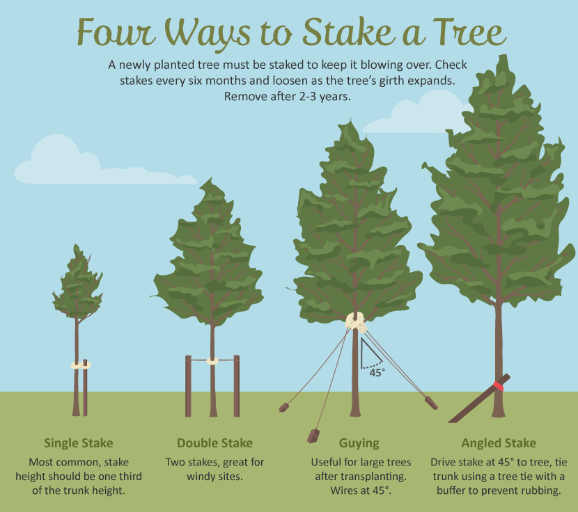 Selecting The Right Tree For Your Garden Tree Support