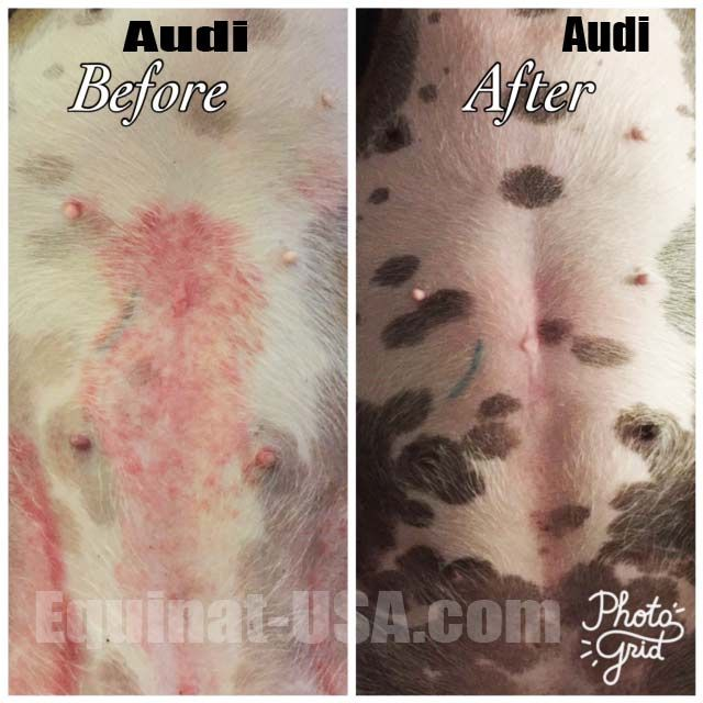 Red Rash Dogs Belly With Images Dog