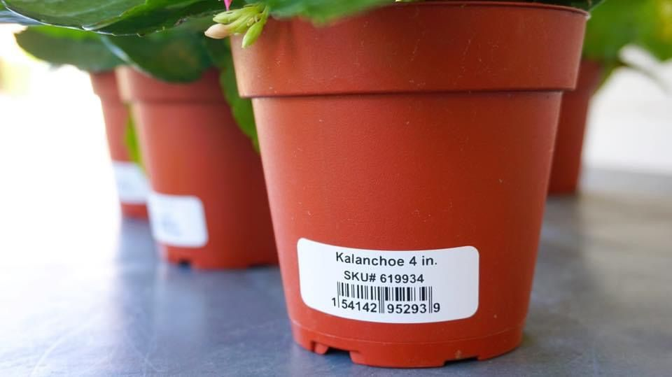Plant Labels Diy Custom Nursery