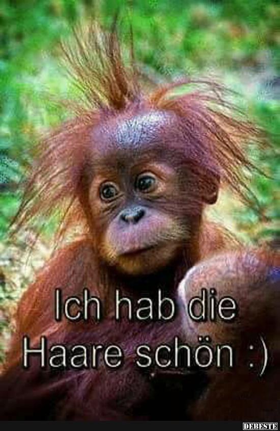 Lustige Bilder Affen