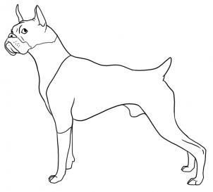 How To Draw A Boxer Dog Step 5 Dog Paintings In 2019 Pinterest