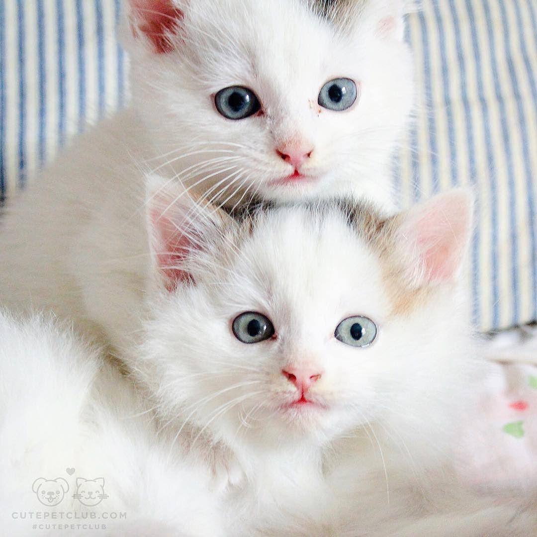 Cute Pet Club Pretty Cats Cute Animals Cute Cats