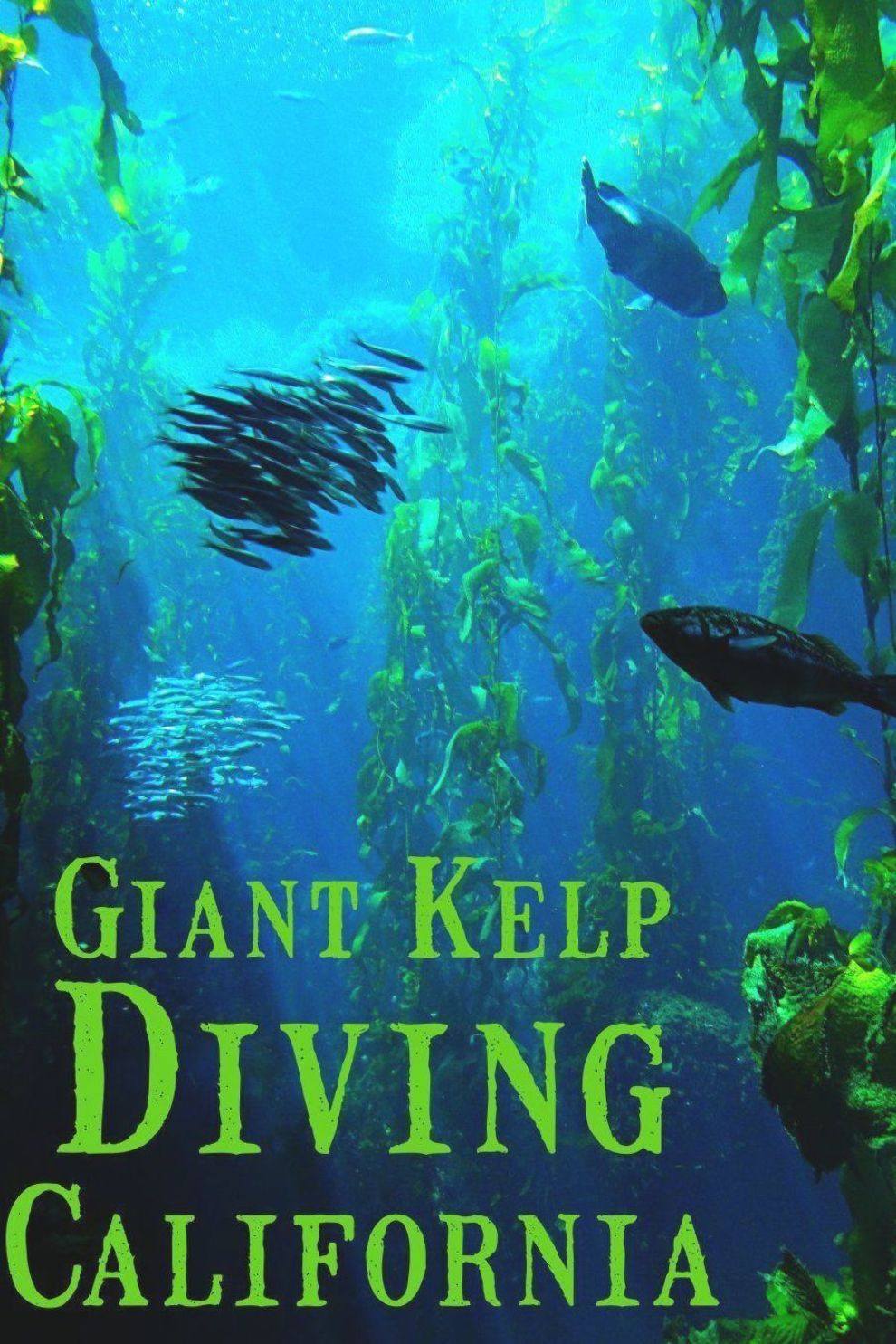 Kelp Diving In The Channel Islands In California Dive In The Giant Kelp Forests Of Anacapa Islands Or Catalina Islands Off T In 2020 Diving Kelp Forest Scuba Diving