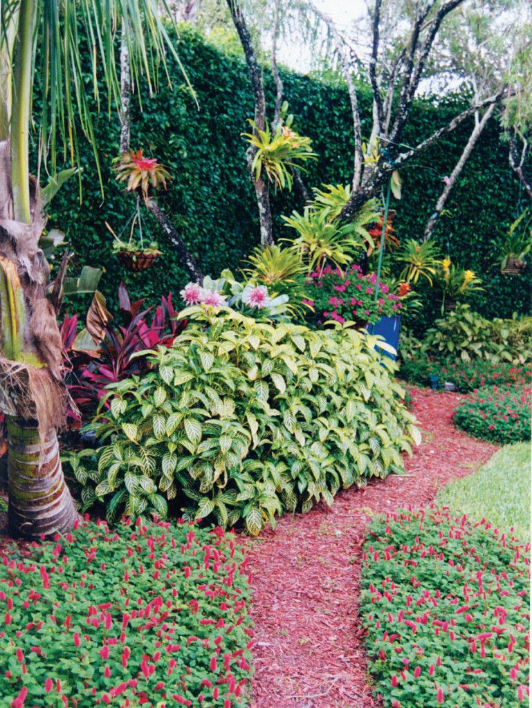 How to Hang Bromeliads in Trees in Palm Beach Gardens Landscapes ...