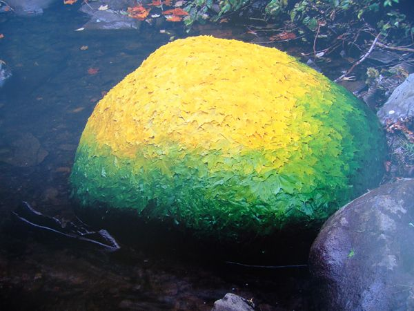 """Image from the book """"Time"""" by Andy Goldsworthy"""
