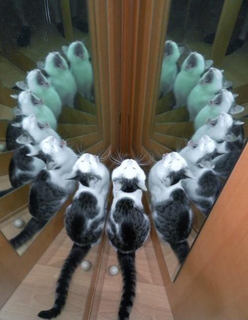 MeowX15