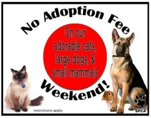 Houston SPCA Free Adoptions June 2123 Spca, Animal
