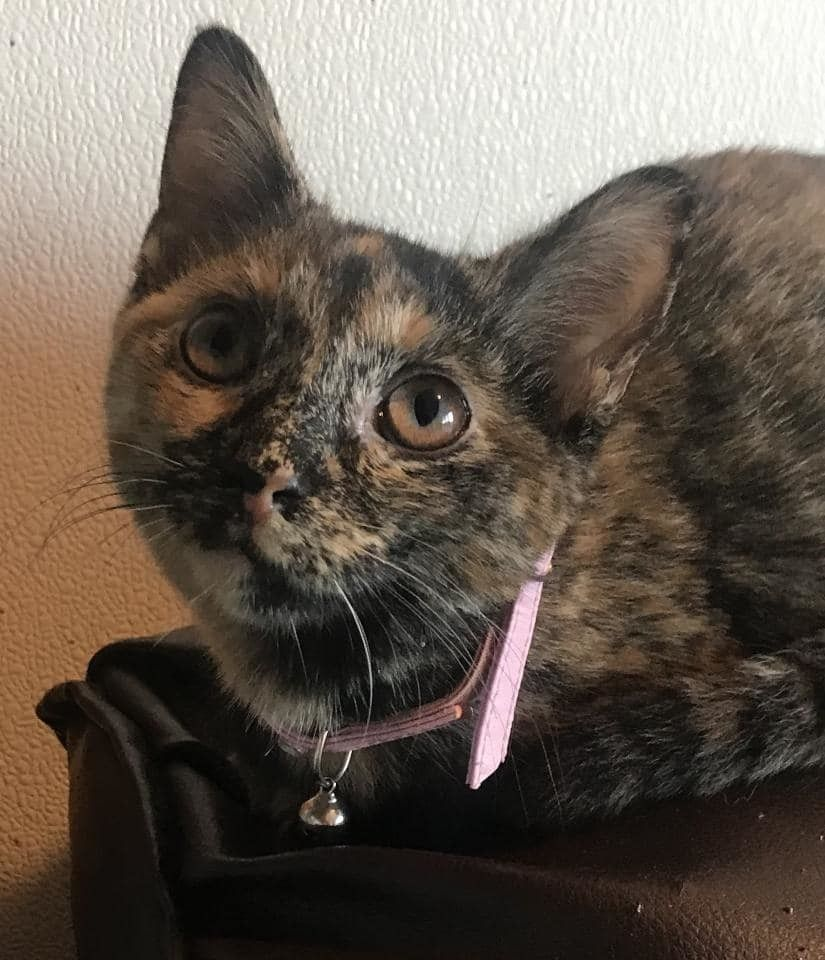 Adopt Bella on Pet adoption, Animal rescue, Adoption
