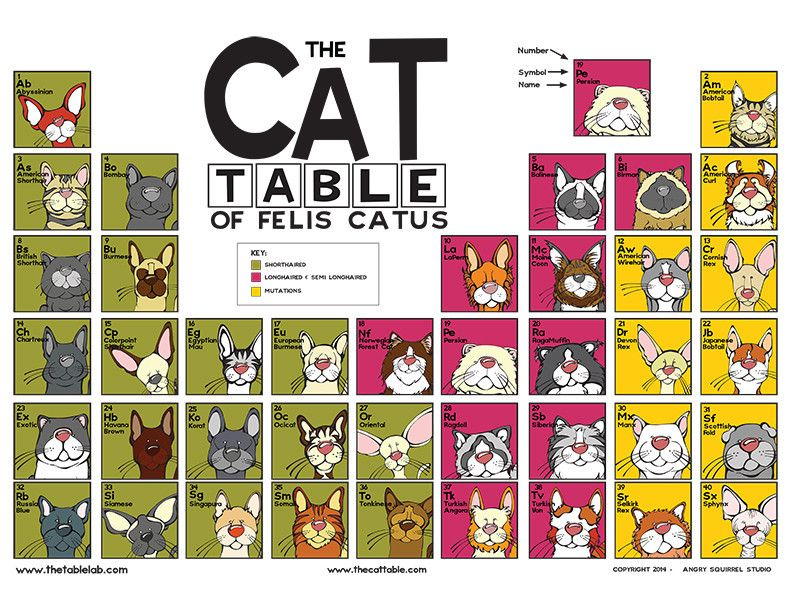 The cat table poster cat dog photography and dog the cat table poster features 40 cat pedigree breeds recognized by the cat fanciers association in the championship class the cats are organized in a urtaz Gallery
