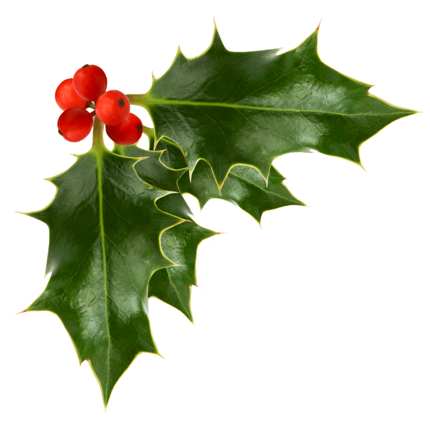 Holly Berries transparent background Holly berries