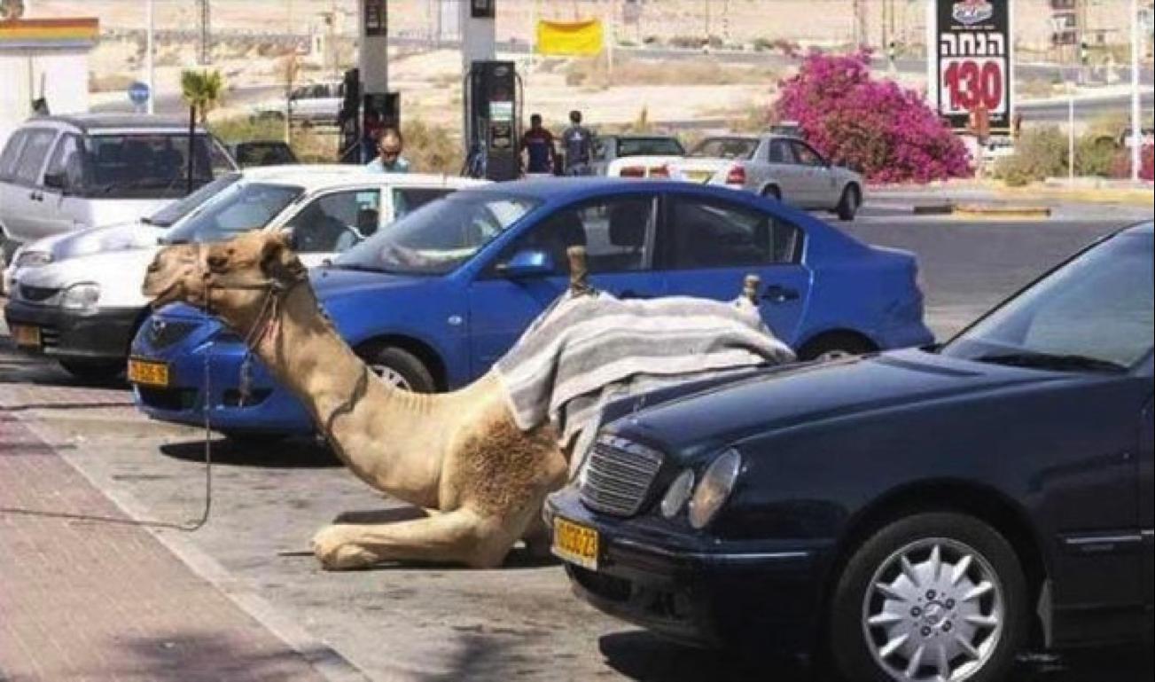 28 Scenes Incroyables Que Vous Ne Pourrez Voir Qu A Dubai Lustige Kamele Lustig Lustige Tierfotos
