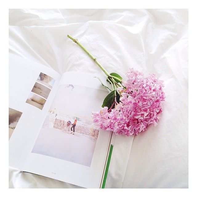 Rise and shine it's a beautiful morning ☀️hydrangea pink flower white sheets