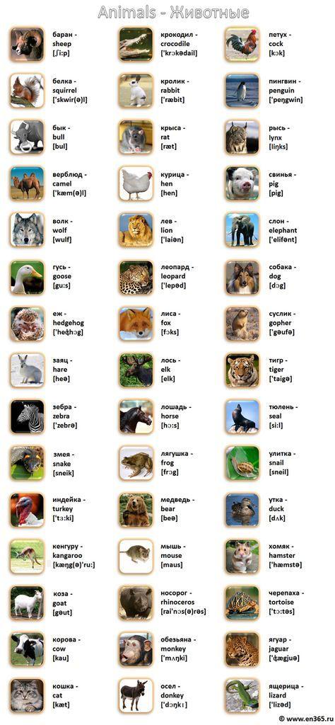 Животные на английском языке в картинках с переводом ...