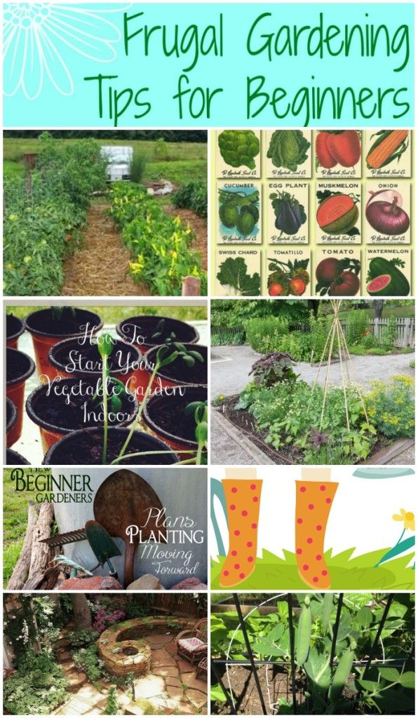 Frugal gardening tips for beginners frugal living and - How to plant a flower garden for dummies ...