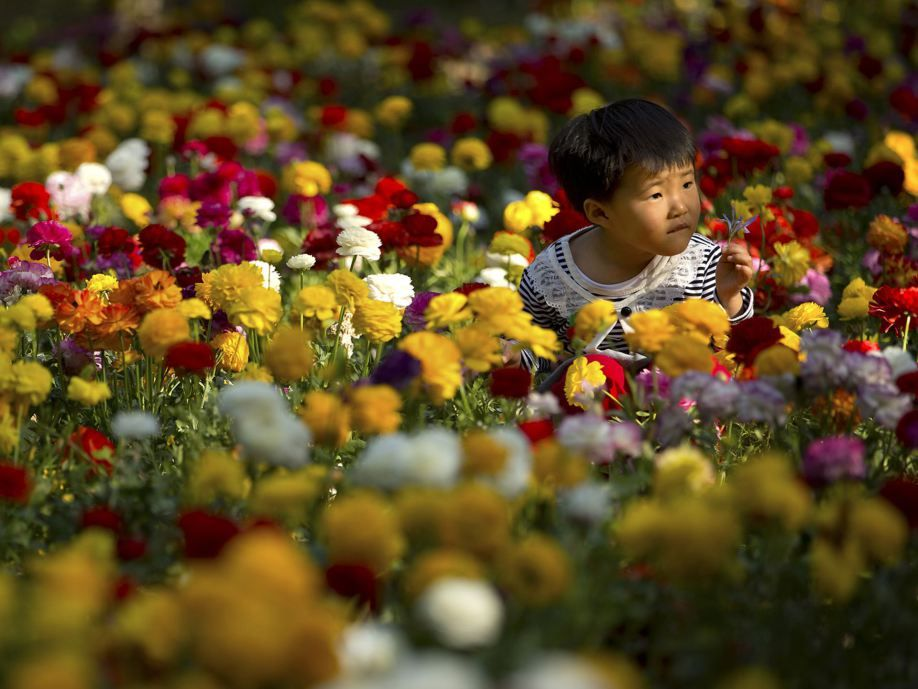 A girl plays in a bed of blooming flowers at the Fragrant Hills Park in suburban Beijing.  Mark Schiefelbein