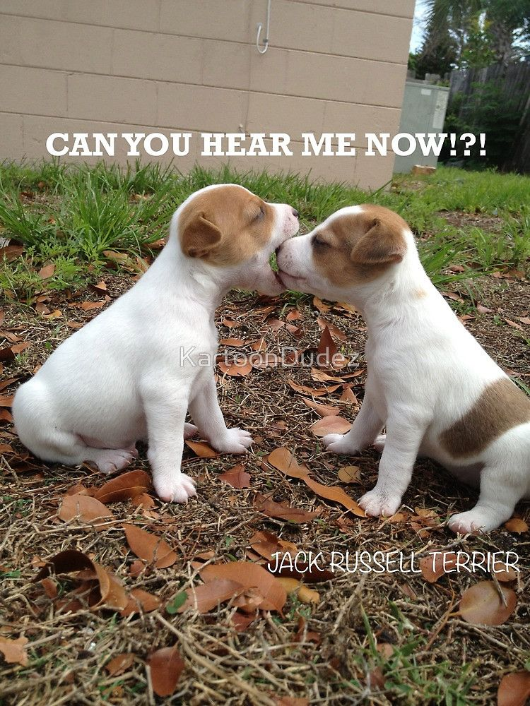 Can you hear me now!?! by KartoonDudez