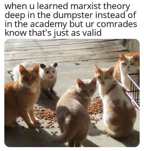 reddit the front page of the Cat memes, Cats