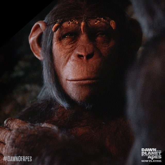 #DawnOfThePlanetOfTheApes (2014) | Planet of the apes ...